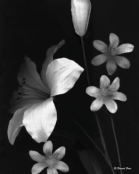 Lilies Two by Artist Frannie Funn Canvas Art Print