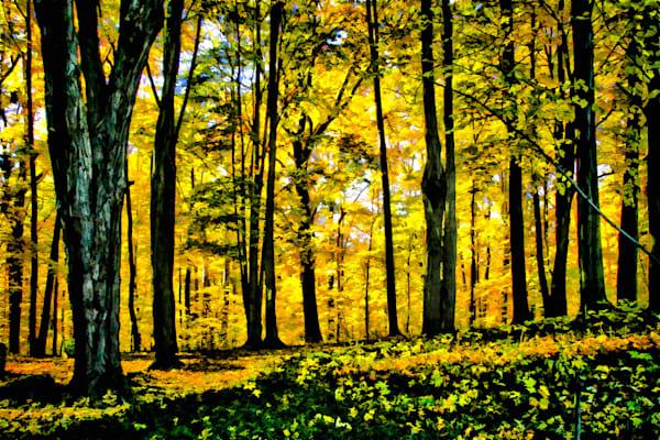 Autumn Glow Art | monroepayne