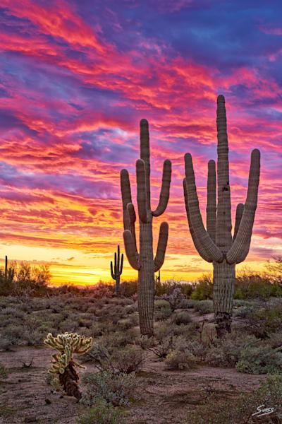Desert Passion - Scottsdale, Arizona