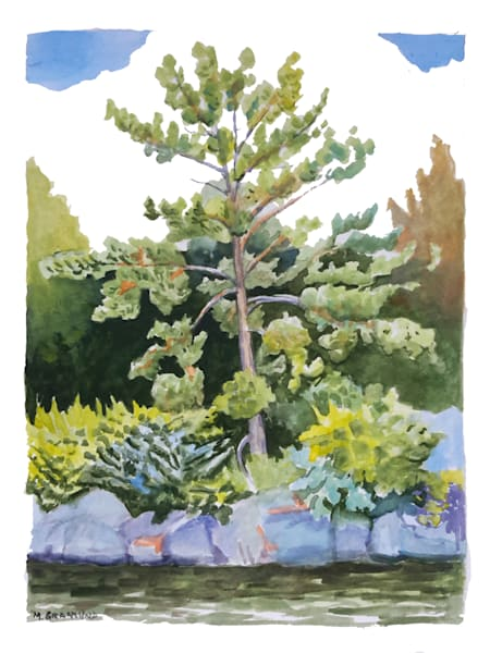 Young White Pine painting by Mark Granlund