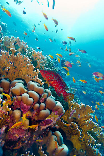 D. Coral Reef with Exotic fish- 29921346