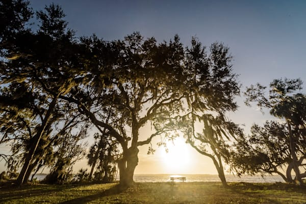 Oak Serenity Sunrise