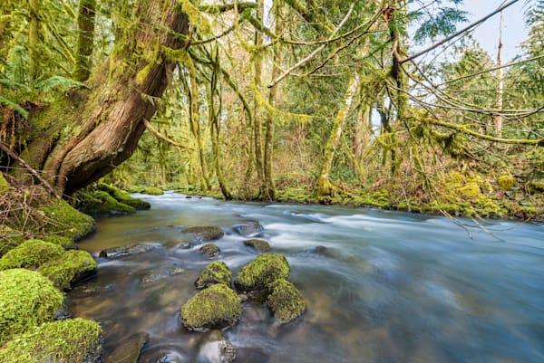 Baker Creek Serenity II