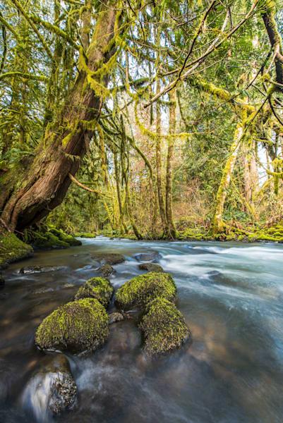 Baker Creek Serenity III