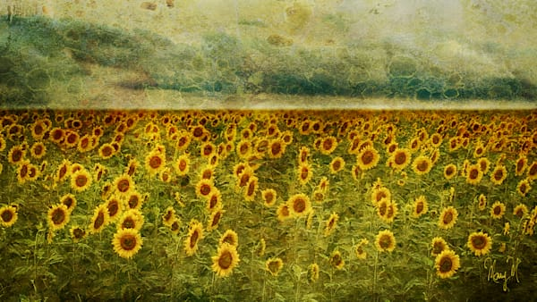 Geoscape Sunflower Field Art | FortMort Fine Art