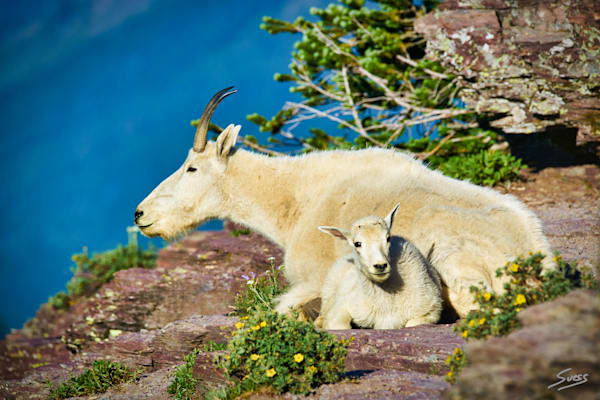 Enjoying the View - Glacier National Park, Montana