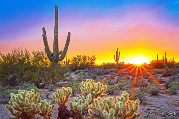 Sonoran Desert DeLight - Arizona