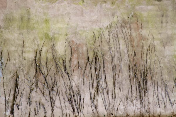 FineArtPhotog-Twigs