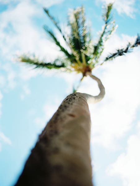 Character in a Palm Tree