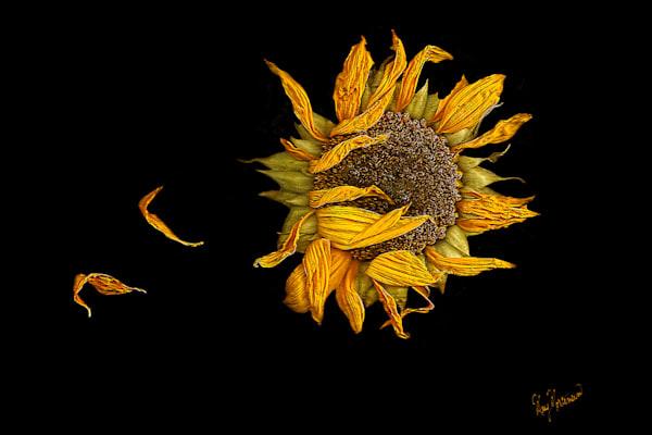 Flowers Aging Gracefully Art | FortMort Fine Art