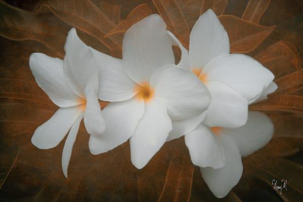 Flowers Translucent Art | FortMort Fine Art
