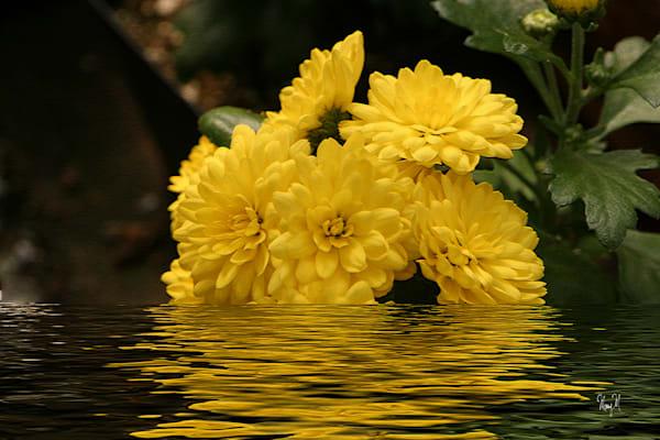 Flowers Floral Float Art | FortMort Fine Art