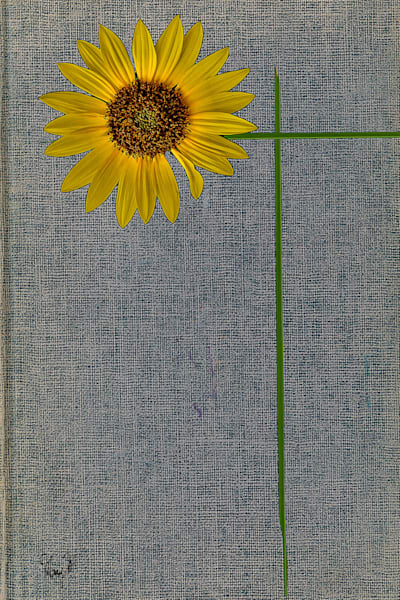 Flowers Daisy Mae Art | FortMort Fine Art