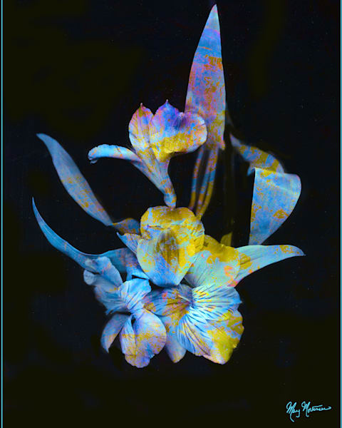 Flowers Psychedelicate Art by FortMort Fine Art
