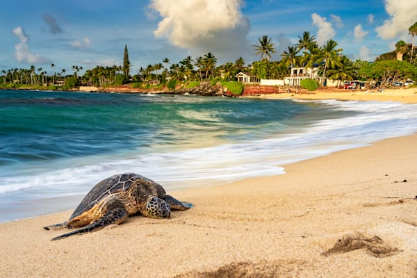 Hawaii Nature Photography | Honu By the Sea by Peter Tang