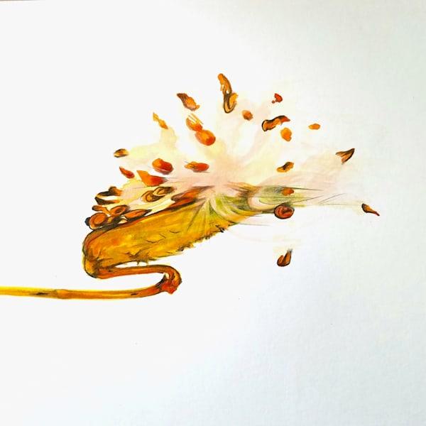 Milkweed Wishes Illustration