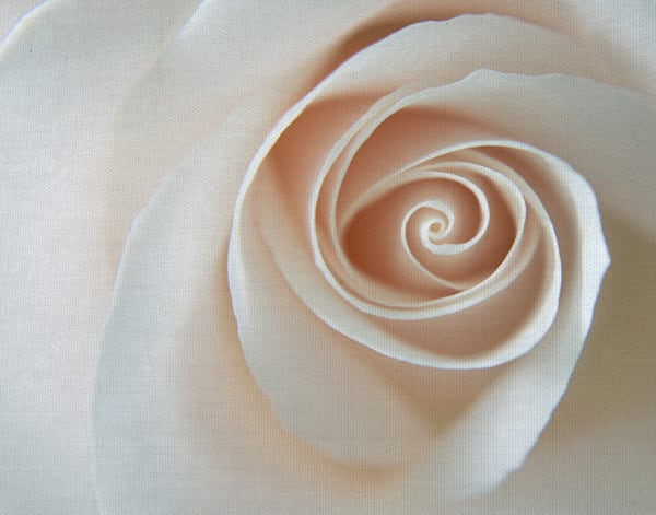 White Rose Swirl by artist Karen Ussery Wrapped Canvas Art Print