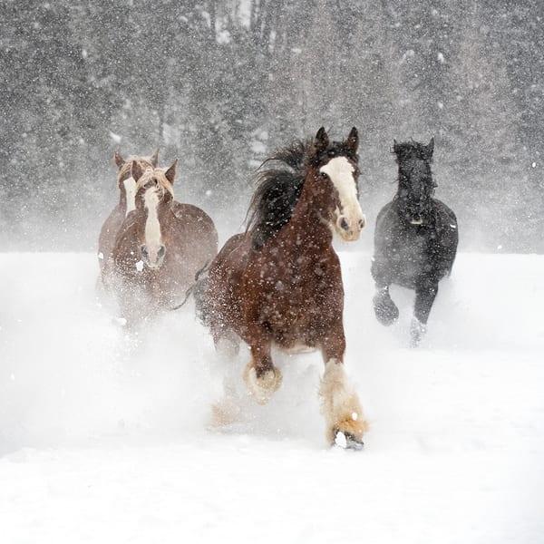 Snowy Horsescape