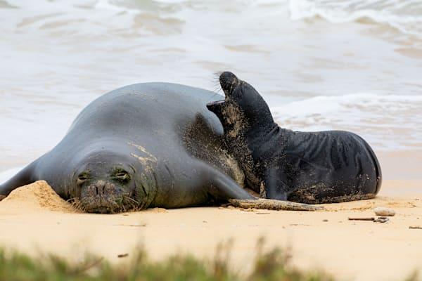 Hawaii Marine Life Photography | Loud Pup by Leighton Lum
