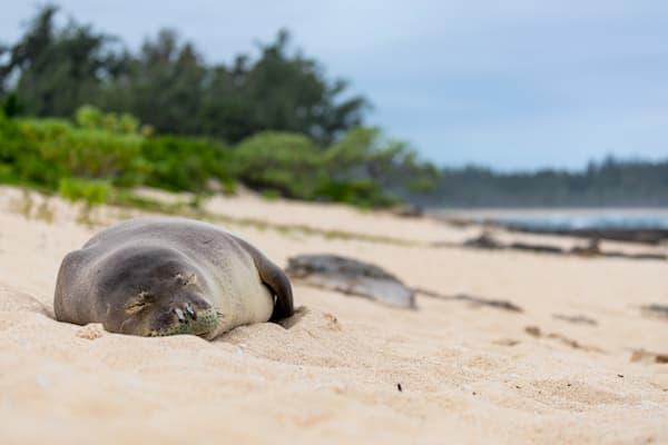 Hawaii Marine Life Photography | Lounging on the Beach by Leighton Lum