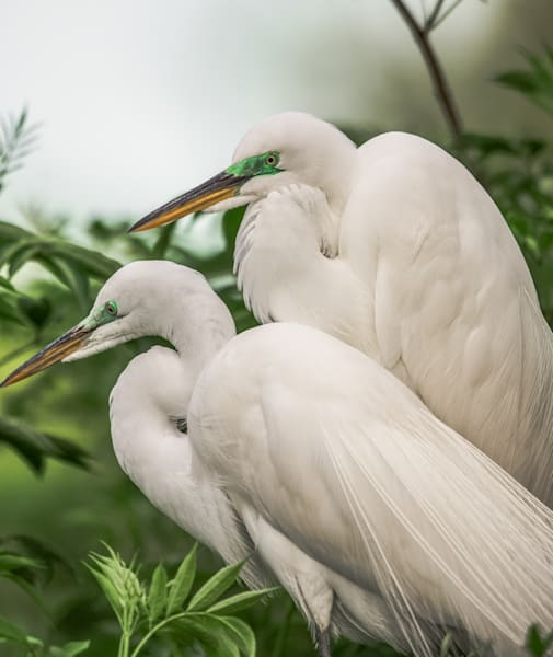 No Regrets Egrets