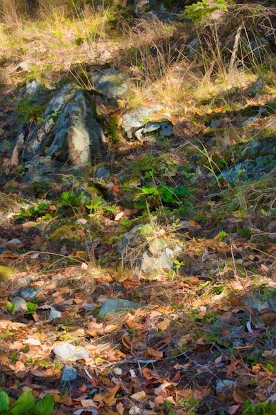 Marine Drive Hillside Art | Northwest Image