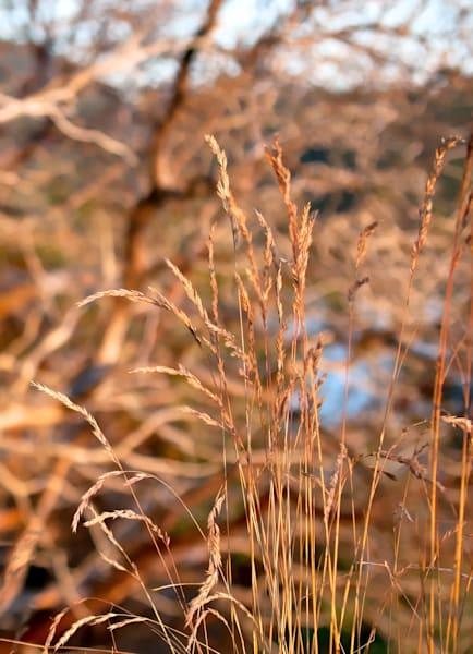 Grasses Art | Northwest Image