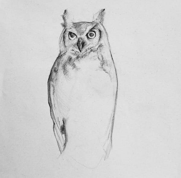 Owl Study 1 Art | East End Arts