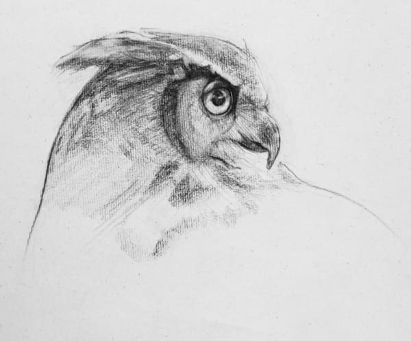 Owl Study 2 Art | East End Arts