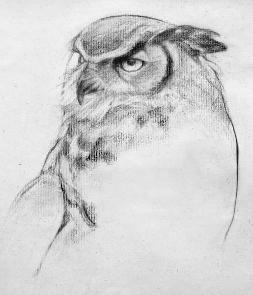 Owl Study 3 Art | East End Arts