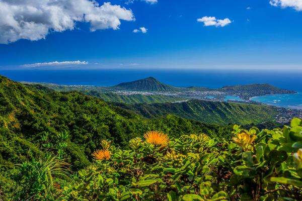 Landscape Photography   Orange Ohia and Maunalua Bay by William Weaver