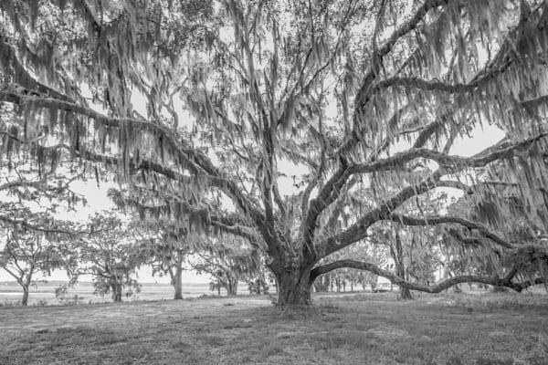 The Souths Live Oak Photography Art | Phil Heim Photography