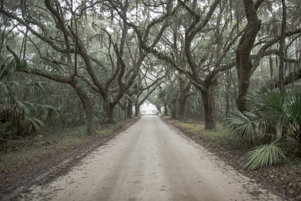 Avenue Of Oaks Photography Art | Phil Heim Photography