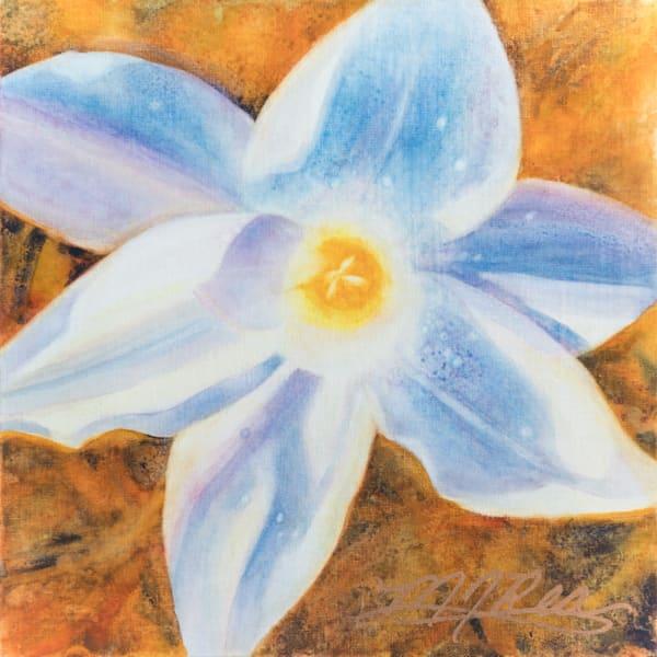 Rain Lily I