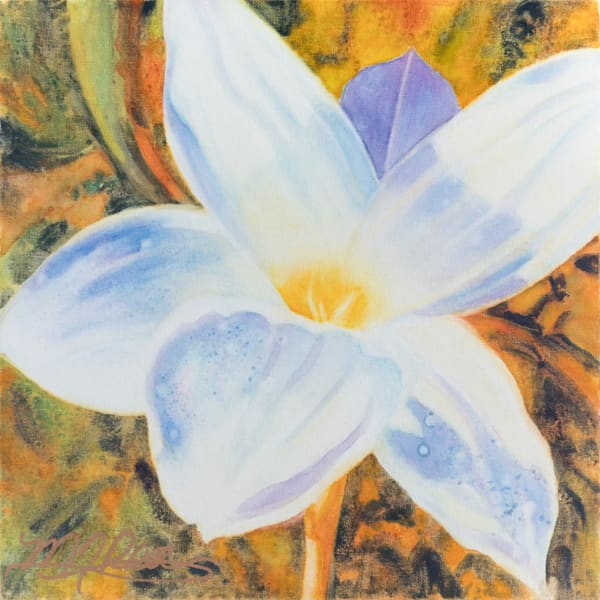 Rain Lily II