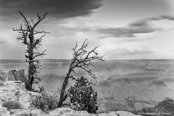 Grand Canyon Dead Trees