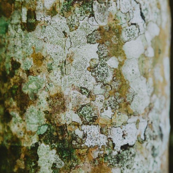 Tree Bark 15