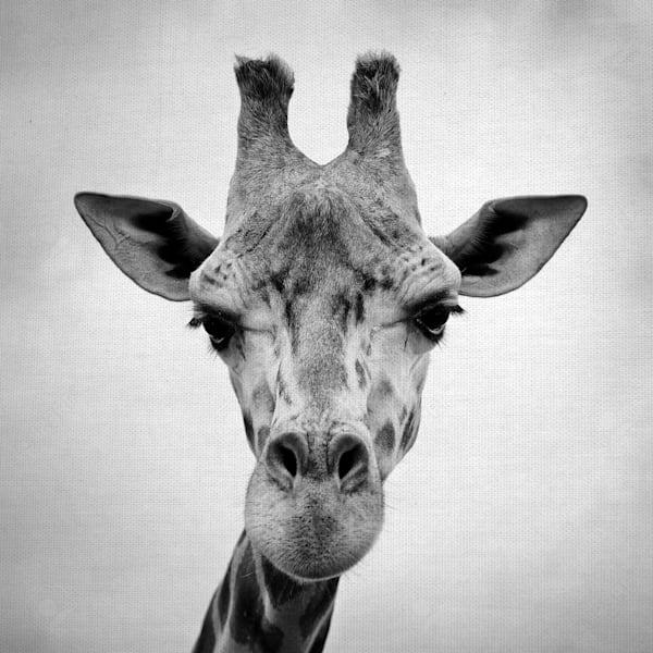 Giraffe by artist PhotoINC Studio Wrapped Canvas Photo Art Print