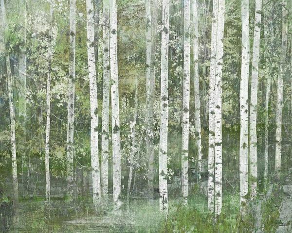 Birch Dream by Willowbrook Fine Art Wrapped Canvas Art Print