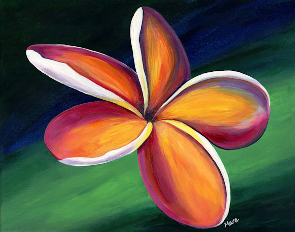 Original acrylic painting of a colorful plumeria flower by artist Mary Anne Hjelmfelt