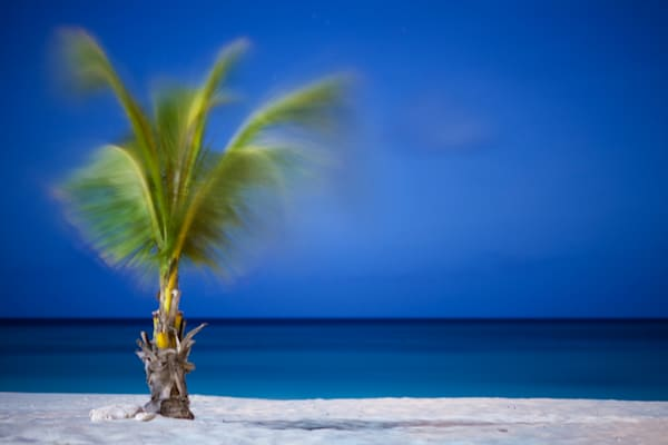 Aruba Breezy Palm | Tropical Landscape Photography Print