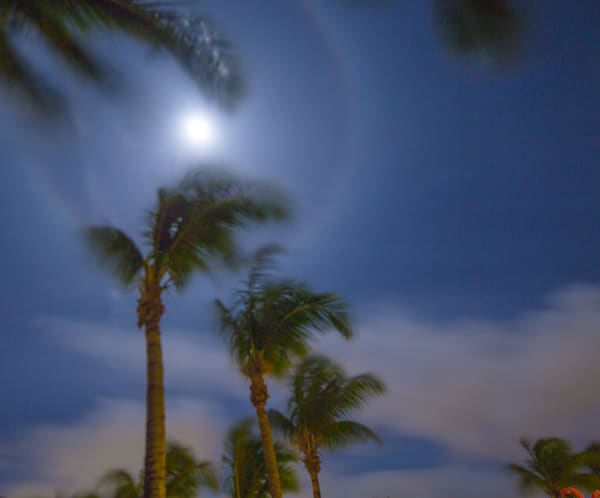 St Martin Palms Under A Full Moon III | Full Moon Photography Print