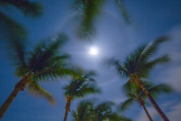 St Martin Palms Under A Full Moon V | Full Moon Photography Print