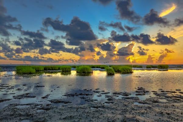 Marsh Oasis