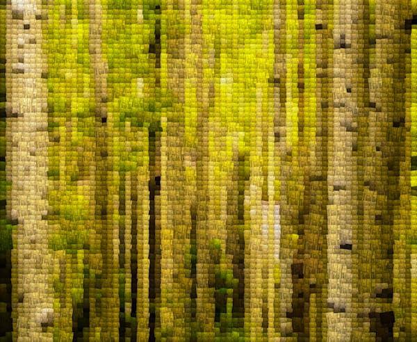 Green Aspens | Photomosaic Photography