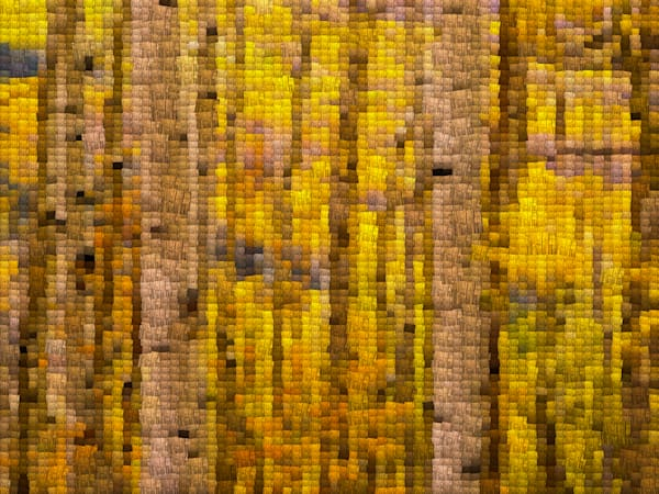 Yellow Aspens Mosaic | Photomosaic Photography