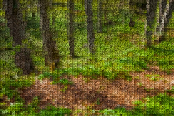 Croatia Forest Trail | Photomosaic Photography