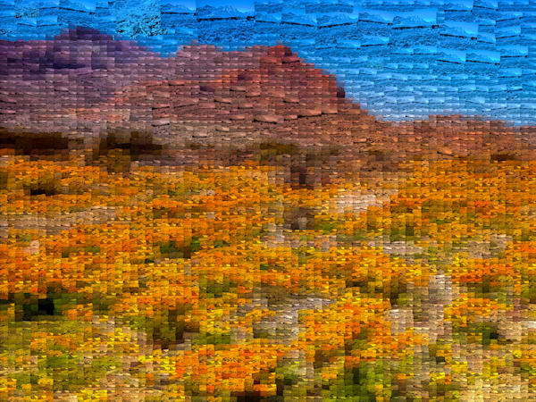 Mountain Poppies | Photomosaic Photography