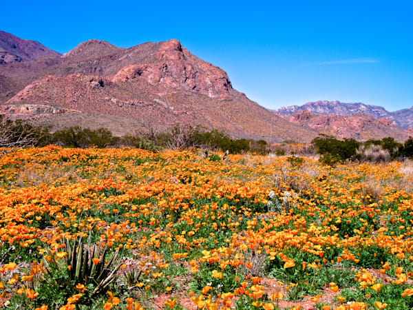 Mountain Poppy Ocean II | Southwest Landscape Photography Print