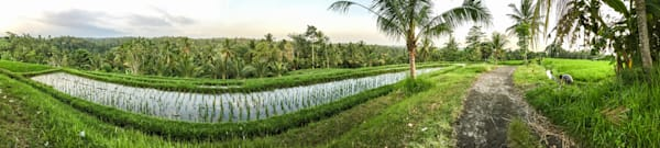 Tabanan Rice Field II